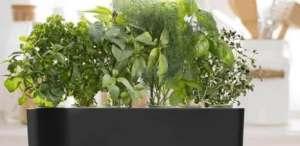 AeroGrow-AeroGarden-Harvest-Slim-Jardin